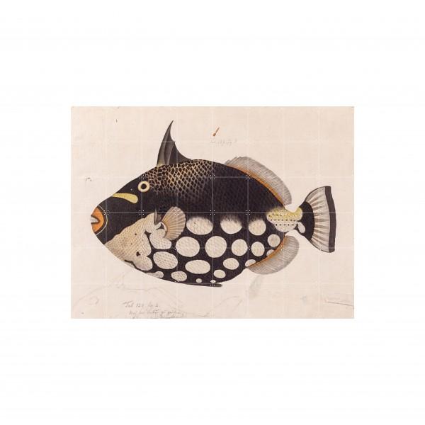 IXXI : Black Fish