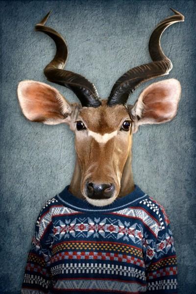 Antilope mit Pulli | Digitaldruck auf Acrylglas