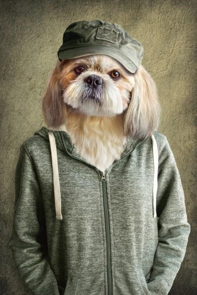 Witziger Hund mit Jacke | Digitaldruck auf Acrylglas